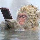 Sevimli maymunlar...