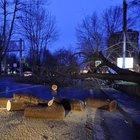 Beşiktaş'ta devrilen ağaç yolu kapattı