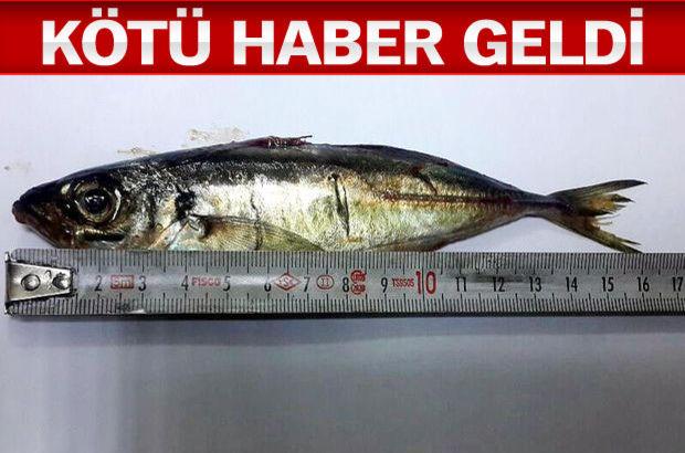 İstanbul canlı istavrit