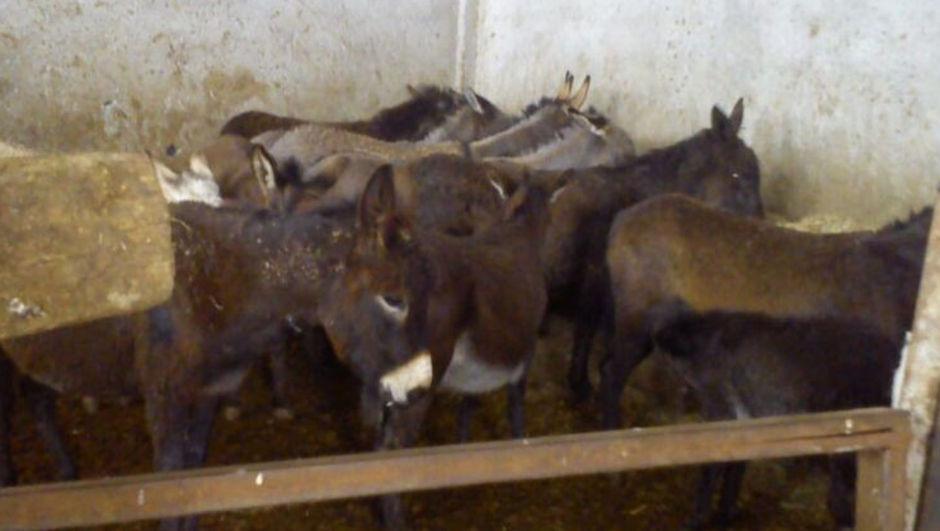 Adana'da at ve eşek eti satan iki kasap yakalandı