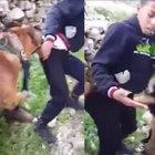 İsrailli askerlerin köpekli işkencesine soruşturma!