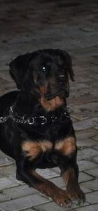 İzmir'in Karataş semtinde köpeğini gezdiren Alay öldürüldü