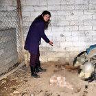 Bursa'da hayvan barınağının içler acısı görüntüsü