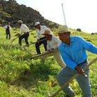 Bakan Mehmet Şimşek'ten çiftçiye tarımsal ödenek müjdesi