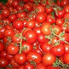 Rusya 25 ton domatesi Türkiye'ye geri gönderdi