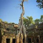 Başların eğik olduğu ülke Kamboçya