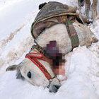 Şırnak Uludere'de 9 katır öldürüldü