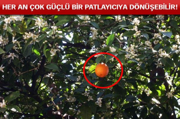 Portakal hakkındaki 20 şok gerçek