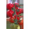 Balkonda hangi sebze-meyve nasıl yetiştirilir?