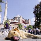 İstanbul'da köpekler ve ben