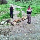 Manisa'da zehirli sakatatla 7 köpek telef edildi