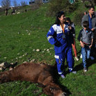 CHP'li Melda Onur ve HAYTAP üyeleri, vurulan katırlar için Şırnak sınırında