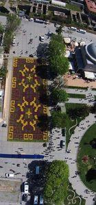 Sultanahmet Meydanı'na 545 bin laleden halı motifi