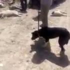 İran'da köpeklere asit enjekte edip işkence edip öldürdüler