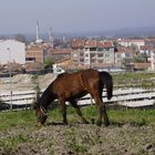 Edirne'nin başıboş at sorunu çözülemiyor