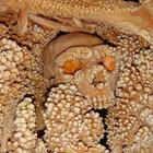 Altamura kentinde bulunan bir iskelet görenleri hayretler içinde bıraktı