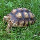 Dünya kaplumbağa toplantısı Muğla'da