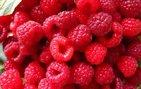 Gelmiş geçmiş en faydalı 50 besin!