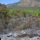 Muğla'nın Köyceğiz İlçesi'nde orman yangını