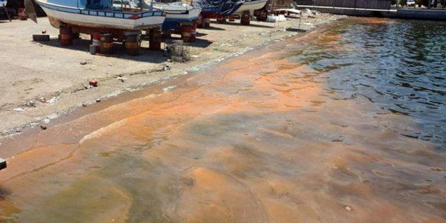 Aliağa'da sahil turuncu renge boyandı. Deniz yüzeyindeki renk değişiminin nedeninin balık yumurtası olduğu ortaya çıktı