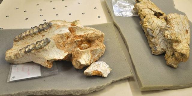 Kırşehir'de 8 milyon yıllık fosil bulundu