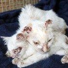 Muğla'da anne ve yavru kediye işkence