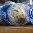 Endonezya'da pet şişelerin içine saklanan papağanlar ele geçirildi