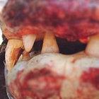Avustralya'da Daly Nehri'nde 6 avcı bu timsahı yakaladı