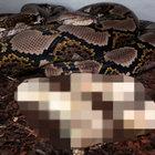 İşte yılanın doğum görüntüleri...