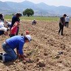 Yırca'ya 6 bin zeytin fidanı
