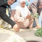 Diyarbakır'da 50 bin kişi şeyhe şifaya gitti