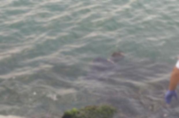 İzmir Körfezi'nde ceset bulundu