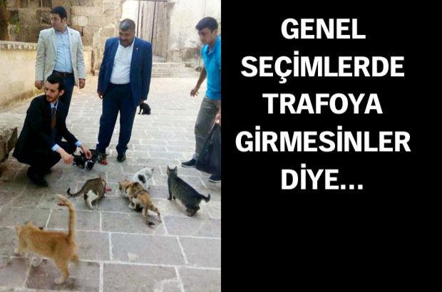 MHP'li adaylar kedileri topladı ve...