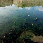 Marmara Denizi'nde 'RED TIDE' ALARMI