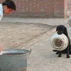 Polis köpeklerinin yemek beklerkenki sevimli halleri