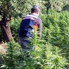 Diyarbakır'da uyuşturucu tarlalarına operasyon