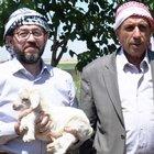 Güllüoğlu yağ tedarikiyle köylüleri iş sahibi yapıyor