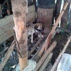 Bolu'da köpeğin başına tencere geçirdiler