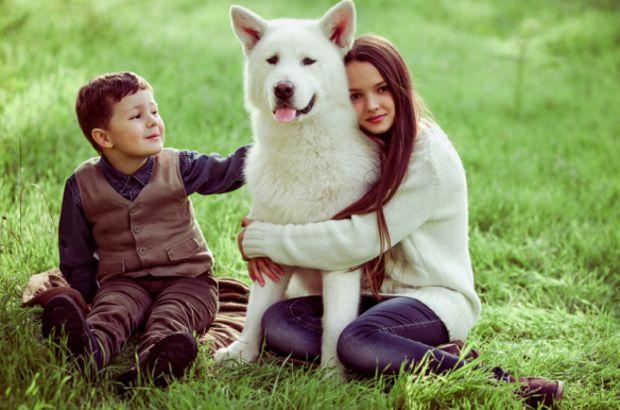 Evcil hayvan beslemek kalp ve damar hastalıkları riskini düşürüyor