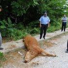 Hayvanlara şiddet devam ediyor