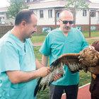 Kuğu ve şahin operasyonu