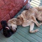 Bakımevinde açlıktan bitkin düşen köpekler tedaviye alındı