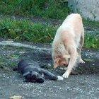 Yavrusu ölen sokak köpeğinin yürek burkan görüntüleri