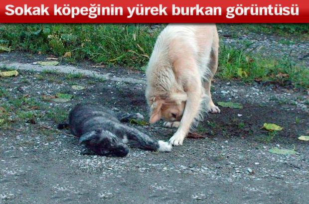 adapazarı ölen köpek sokak köpeği