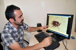 Dünyanın en pahalı ve en güçlü böceği Hakkari'de