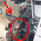 Leopor turistlere saldırdı...