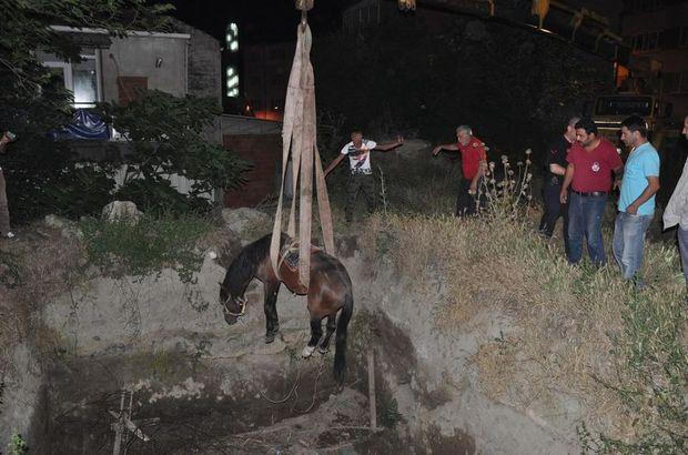 Bursa, İnegöl, At kurtarma operasyonu