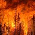 Yangın 3 eyalete sıçradı!