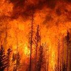 Kanada'da büyük orman yangın