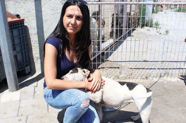 İstanbul Yedikule barınak köpek pitbull